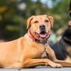 Ketahui 7 Ciri-ciri Anjing Sehat untuk Memastikan Mereka Aman dari Penyakit