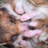 Wajib Paham! Ini Ternyata Penyebab Utama Hamster Kamu Sering Mati Saat Dipelihara
