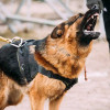 Sangat Efektif, 8 Cara Menenangkan Anjing Menggonggong