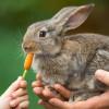 Ingin Kelinci Kamu Sehat? Ketahui 5 Jenis Makanan Kelinci yang Sehat Ini!