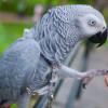 Wow, Ini 5 Jenis Burung Paling Pintar di Dunia, Mau Coba Pelihara?