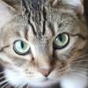 Kenali Jenis-Jenis Sakit Mata pada Kucing yang Umum Ditemui dan Cara Mengatasinya