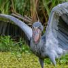 Lebih Tinggi dari Manusia, Ini Burung Terbesar di Dunia yang masih Hidup Hingga Saat Ini!