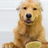 Begini Cara Memandikan Anjing Sendiri di Rumah, Murah Tak Perlu ke Salon!