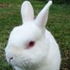 Mengenal Jenis Kelinci Pedaging, Budidaya Ternak Kelinci yang Menguntungkan
