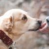 Berapa Umur Anjing Kesayanganmu Jika Dibandingkan Umur Manusia? Cek Disini
