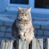 Sering Bersifat Aneh, Ini 5 Ciri Ciri Kucing Peliharaanmu Sedang Cemburu