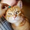 Kenapa suhu Badan Kucing Menjadi Panas? Ini Penyebab dan Tanda-tandanya