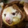 Eksotis! Inilah Hewan Asli Papua yang Hampir Punah dan Wajib Dilestarikan
