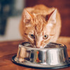 Jangan Berikan! Ini 8 Makanan yang Tidak Boleh Dimakan untuk Kucing Kesayanganmu