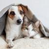 Akur Banget, Ini 6 Bukti Bahwa Anjing dan Kucing Bisa Hidup Berdampingan