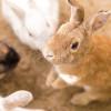 Tenang, 7 Cara Mengobati Kelinci Mencret Ini Mudah untuk Dilakukan