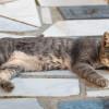 Ingin Pelihara Kucing Gratis? Begini Cara Menjinakkan Kucing Liar yang Galak dengan Mudah