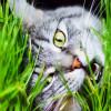 Ternyata Ini Alasan Kenapa Kucing Suka Makan Rumput & Tanaman yang Paling Disukai