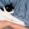 Jangan Salah, Ini Manfaat Memelihara Kucing Bagi Kesehatan Tubuh Manusia