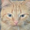 Kucing Kamu Flu Berat? Begini Cara Ampuh Mengobati Kucing yang Flu, Dijamin Ampuh!