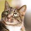 7 Bahaya Bulu Kucing yang Bisa Merusak Kesehatan Manusia