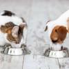 Bolehkah Makanan Kucing Disajikan untuk Anjing? Ini Jawaban dan Faktanya
