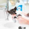 Jangan Terburu-buru! Ini Waktu Tepat untuk Memandikan Anak Kucing Setelah Lahir