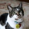 Makin Disayang! Begini Cara Merawat Kucing Kampung Agar Bulunya Lebat dan Gemuk