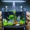 Rekomendasi 7 Ikan Kecil Terbaik untuk Mempercantik Akuarium Kecil Di Rumahmu