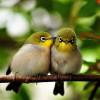 Suaranya Mantap! Inilah Jenis-Jenis Burung Kecil yang Bagus untuk Dipelihara