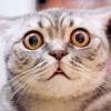 Sering Kaget, Ternyata Ini Alasan Kenapa Kucing Takut dengan Mentimun!