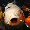 6 Cara Budidaya Ikan Air Tawar yang Mudah untuk Pemula, Siap Berbisnis!
