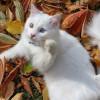 Tanpa Kawin! Inilah Cara Mengatasi Kucing Betina Birahi yang Perlu Diketahui