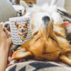 Wah, 5 Artis Muslim ini Ternyata Memelihara Anjing, Apa Saja Anjingnya?