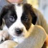 Mau Pelihara Anjing? Baca Dulu Tips Memilih Anjing Peliharaan yang Cocok Berikut Ini