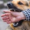 Tak Hanya Mulut Berbusa! Inilah Ciri-Ciri Anjing Rabies yang Perlu Diwaspadai