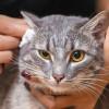 Bisa Diterapkan Dirumah, Begini Cara Memandikan Kucing Agar Tidak Berontak!