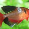 Waspada! Ini Dia 6 Penyakit Penyebab Ikan Berjamur yang Perlu Kamu Ketahui