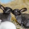 Pecinta Kelinci, Wajib Paham Cara Berkomunikasi Kelinci Lewat Bahasa Tubuhnya!