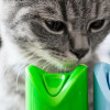 Kucing Mati Keracunan? Kenali Ciri-Ciri dan Beberapa Hal yang Harus Dilakukan