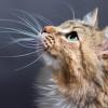 Jangan Dipotong! Ternyata Kumis pada Kucing Memiliki Fungsi Sangat Penting, Lho