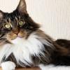 Jenis dan Manfaat Vitamin Kucing, untuk Pemulihan Kucing Sakit Hingga Biar Gemuk