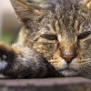 Waspada! Ini Penyebab Kucing Cacingan yang Berisiko di Sekitar Tempat Tinggalnya