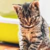 Pup Kucing Berdarah? Jangan Panik, Ini Ciri-Ciri, Penyebab, dan Cara Mengobatinya!