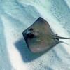 7 Jenis Ikan Laut Dangkal yang Kamu Wajib Tahu, Diincar Pemancing!