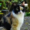 8 Fakta Menarik Seputar Kucing Belang Tiga, Banyak Mitos yang Salah!