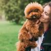 Lagi Cari Anjing Ras yang Murah? Ini Beberapa Rekomendasinya!