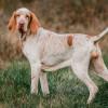5 Bahasa Tubuh Anjing yang Wajib Kamu Kenali Biar Makin Akrab!