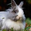 Pasti Akurat! Ketahui Ciri-ciri Kelinci Hamil Melalui 7 Tanda Berikut