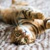 7 Tingkah Laku Kucing ini Bikin Kita Ingin Tahu Artinya