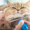 6 Tips Menjaga Rumah Tetap Bersih Saat Memelihara Hewan Peliharaan di Dalam Rumah