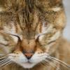 Apa Itu Distemper Kucing? Ini Penjelasan, Gejala, dan Cara Mengobatinya!