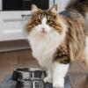 7 Vitamin Bulu Kucing Terbaik | Bulu Langsung Sehat dan Lebat!