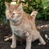 Penyebab dan Cara Mengatasi Kucing Susah Buang Air Besar, Langsung Lancar!
